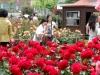 원주 장미축제 7일부터 9일까지 개최