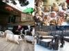 [이천] 1박2일 주말여행...'돼지보러오면돼지'보고 ''테르메덴'온천 즐기고