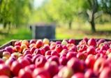 [충북 보은] 사과와 대추 그리고 풍성한 문화 축제의 고장
