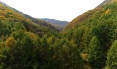 [명상음악]  '가을이다. 부디 아프지 마라'...마인드그라운드, 10월17일 오후 3시부터 1시간 진행