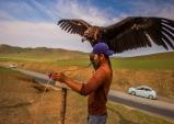 [최치선의 포토에세이] 몽골...독수리가 사는 법