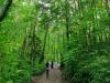 [2021 트래블아이 울릉도·독도 팸투어 기자단] 신령수가 있는 나리분지 숲길 트레킹
