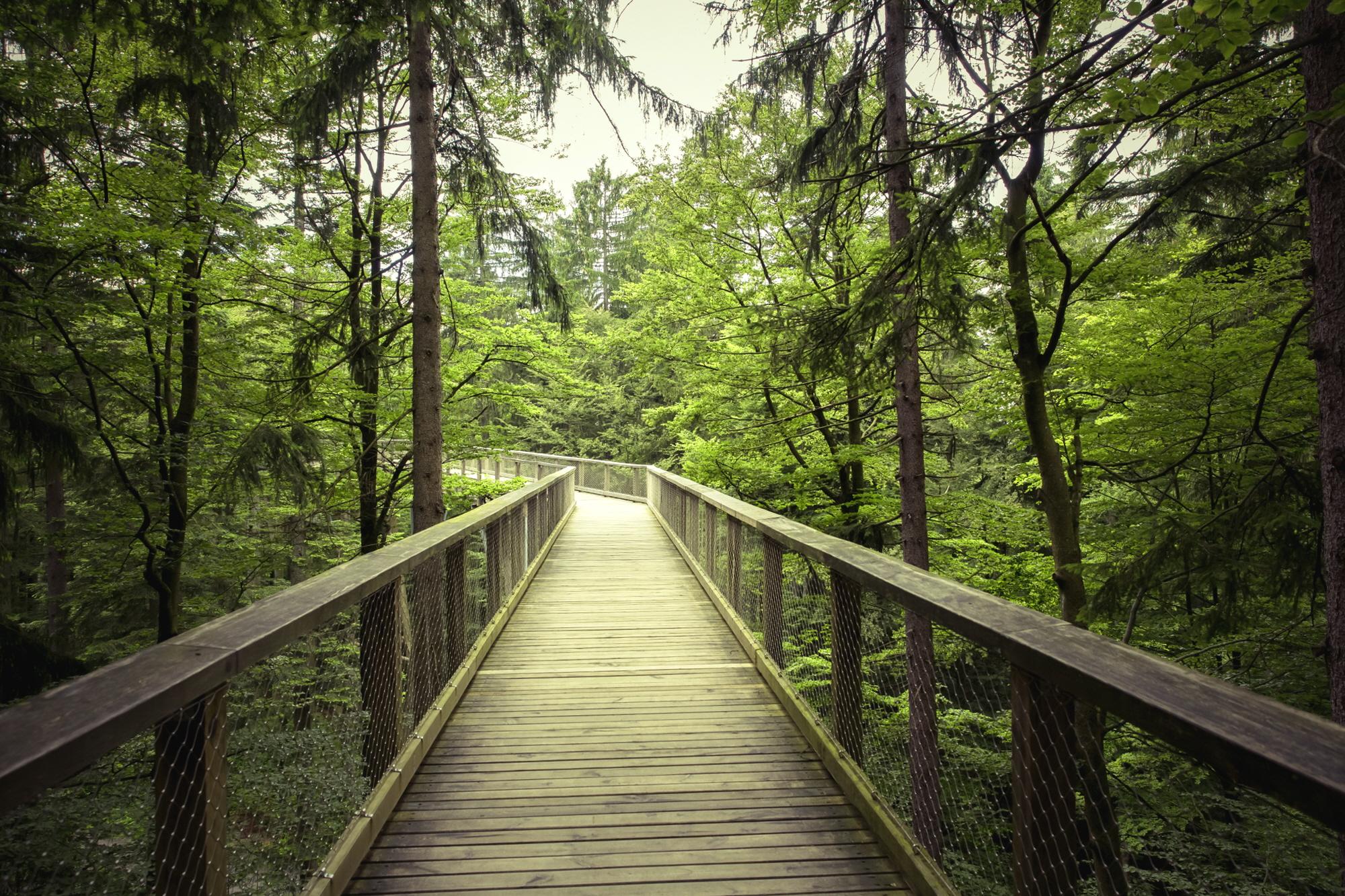 숲1.jpg