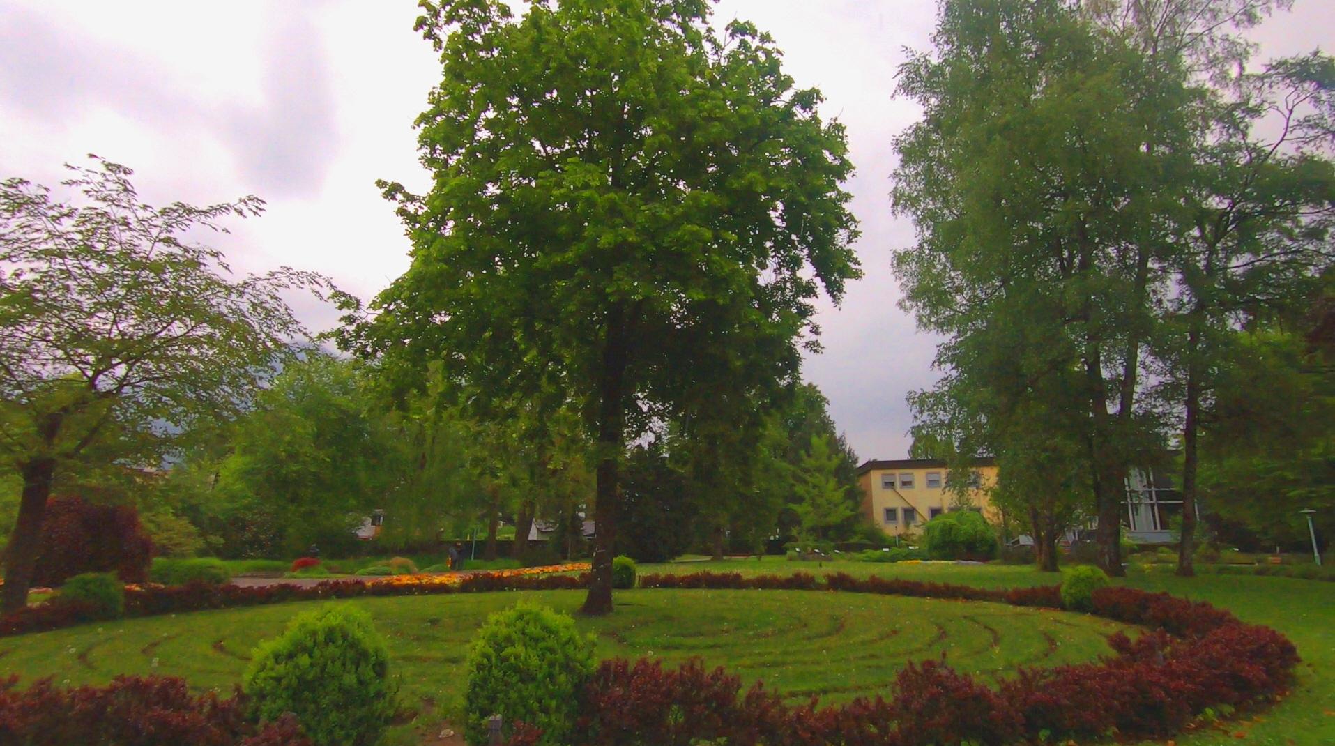 라임나무2.jpg