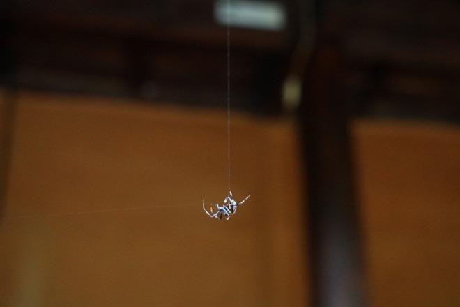 거미.jpg