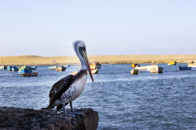 pelican-5312055_1920.jpg